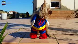 Funny Crazy Dogs & Cute Puppies in Costumes Viral Video Compilations