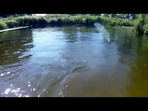 паппарацциирую рыбок на