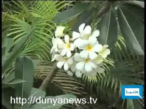 Dunya TV-Plants Nurseries Karachi