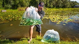 Stocking Pond With 150 JUMBO Wild Shiners!!! (big bass surprise)