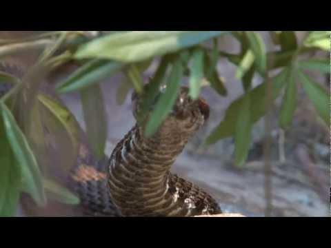 ZSL London Zoo - Reptile House