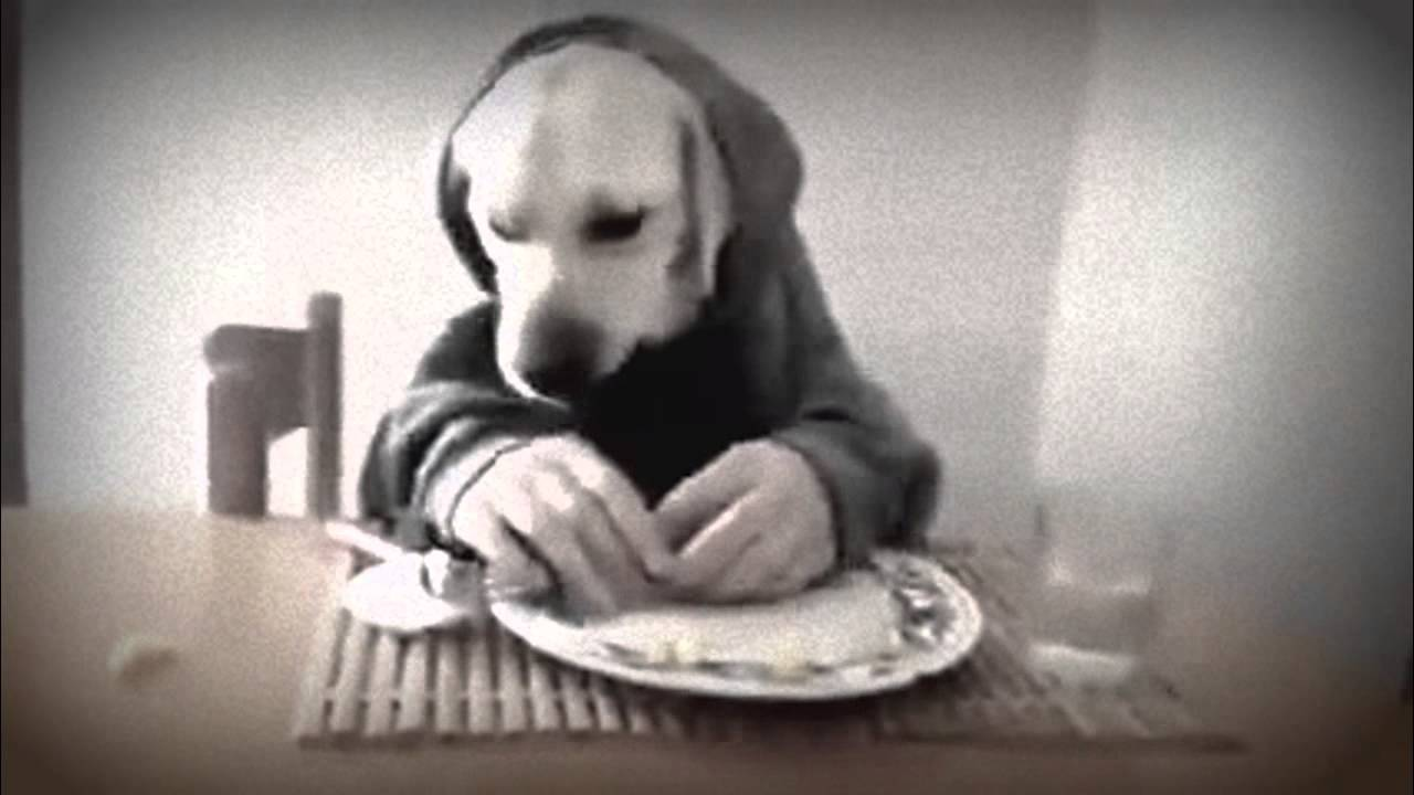 top 10 funny dogs 2015,cat,images,quotes,pictures,videos ...
