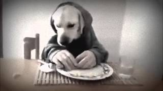 Top 10 Funny Dogs 2015,cat,images,quotes,pictures,videos Youtube Funny Dog Video Goes Viral