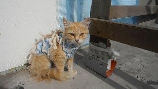 Что стало с кошкой после стерилизации