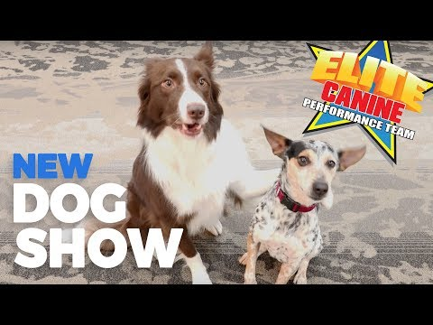Amazing New Dog Show from the Elite Canine Performance Team!