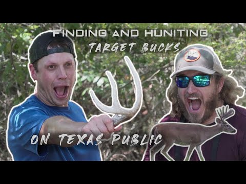DEER BEDS On PUBLIC?? | HOW TO FIND BUCKS ON TEXAS PUBLIC HUNTING LAND | WE FOUND A SHED!!