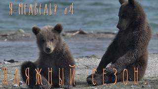 Пляжный сезон. Медвежата играют//Бурый медведь#4//Детям о животных//Природа для самых маленьких.