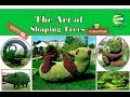 Topiary   the art of shaping trees