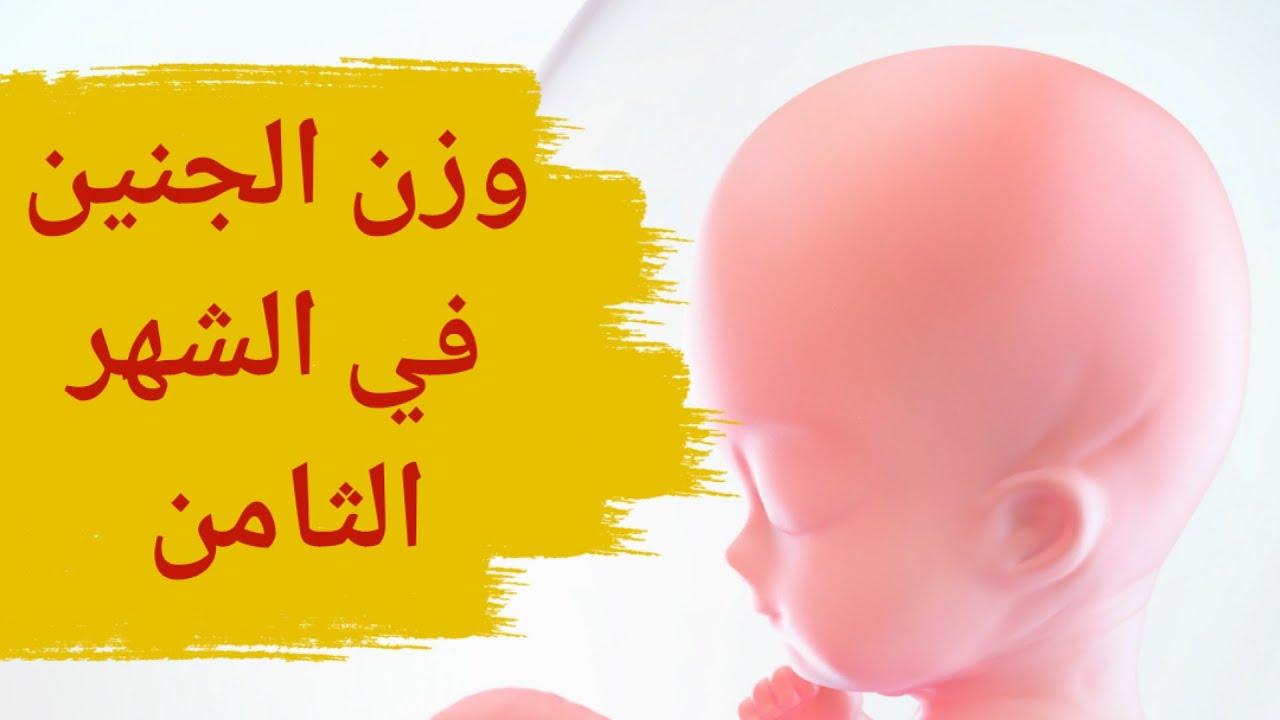 وزن الجنين في الشهر الثامن من الحمل الوزن الطبيعي للجنين في الشهر الثامن الحمل في الشهر الثامن Youtube