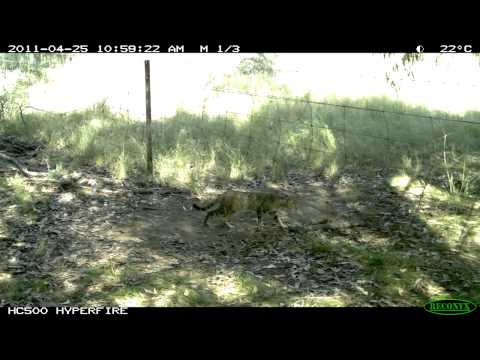 Feral cats in Australia: Part 8 - How to achieve better control
