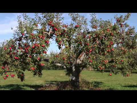 Fast Growing Fruit Trees For Sale