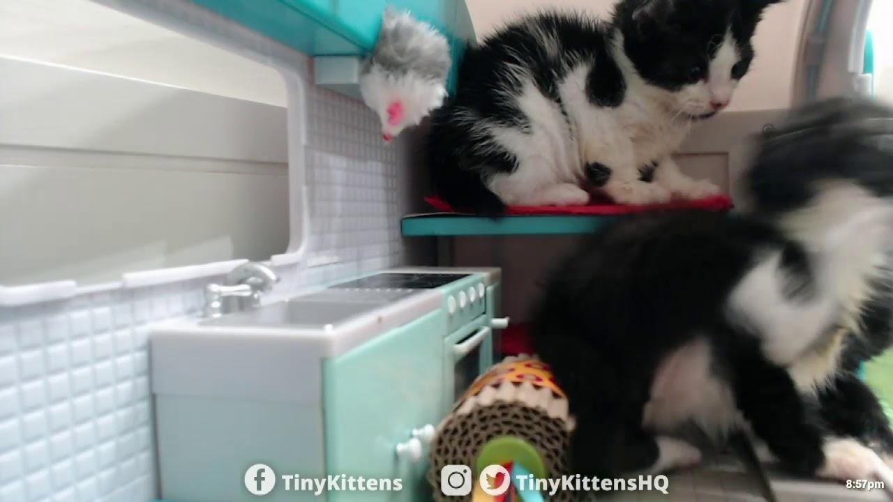Kinks go Kamping!  TinyKittens.com