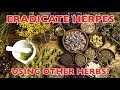 ERADICATE HERPES WHILE TAKING OTHER HERBS!