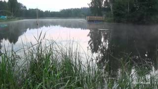 Download Медитация. релакс. Йога. Природа. Утро. Туман. Озеро. Пение птиц. Красивая музыка. Mp3 and Videos