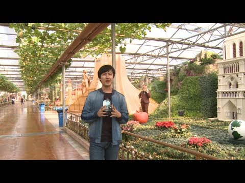 LIVE: Explore China's capital of vegetables