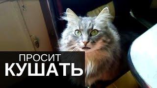 Как кошка мяукает. Как смешная кошка просит кушать. Домашние кошки