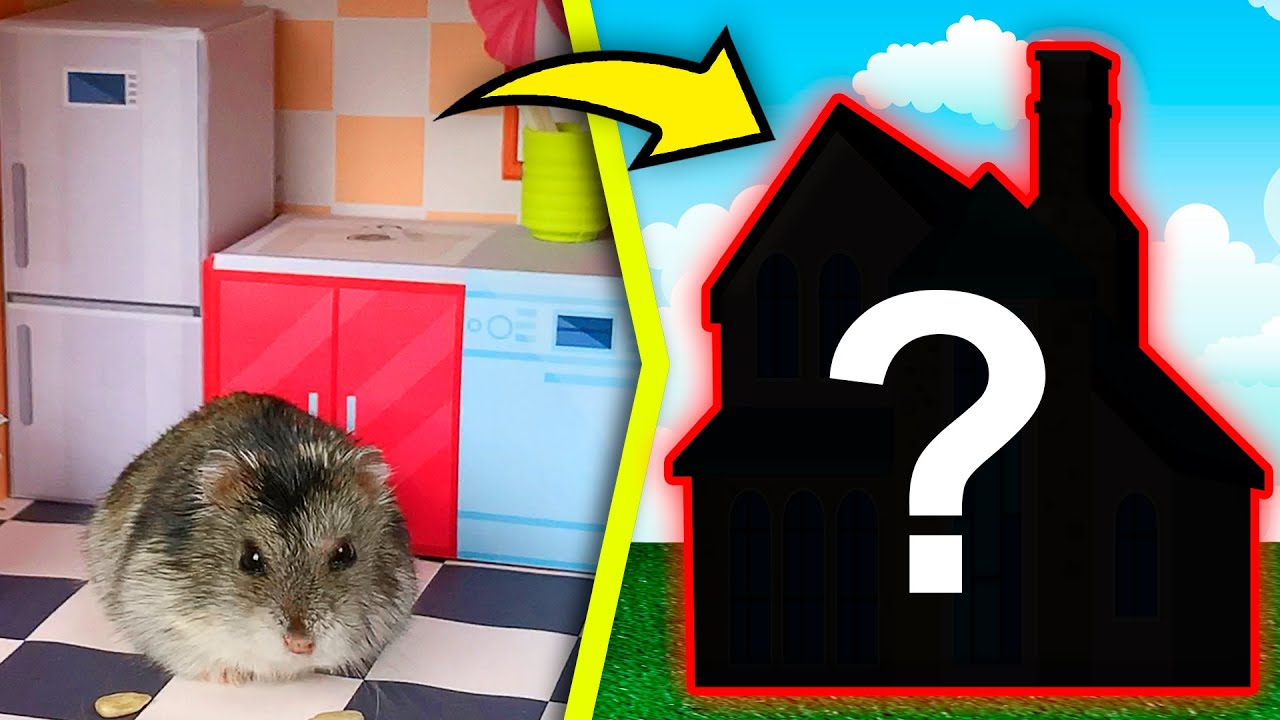 Hamster in House Maze | DIY Home for Hamsters Show