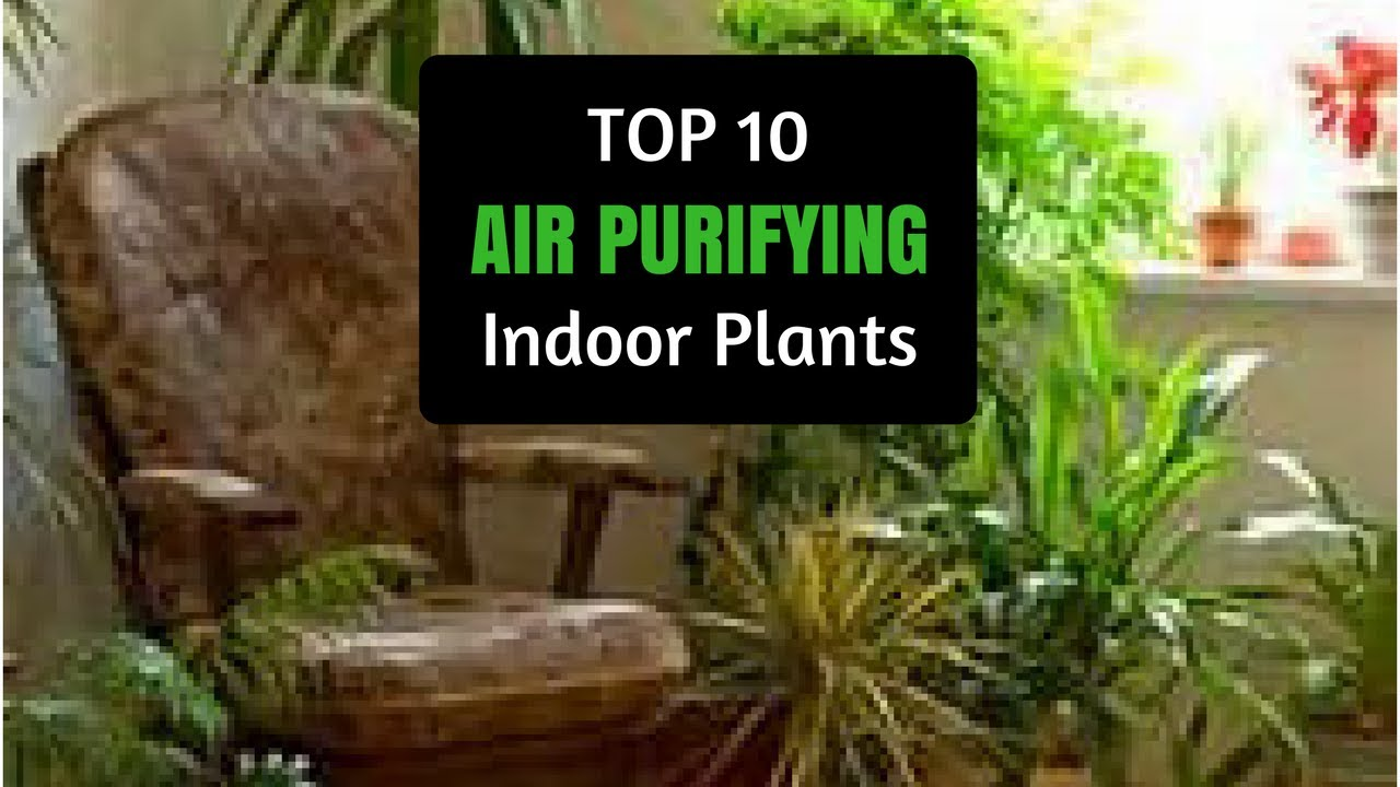 Natural air purifier top 10 best plants for air quality air purifying plants for clean air - Best plants for home ...