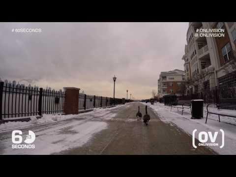 (OV) Port Imperial / Weehawken. New Jersey. NJ. Near Ferry. Hudson River. 4k. Snow with ducks