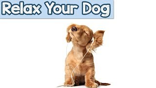 Relaxation Music to Help your new dog or puppy, with travelling or car journeys stress