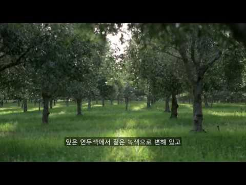 Olio Bello (Korean Subtitles)