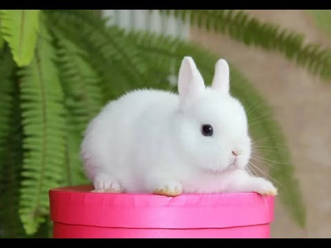 Кролик декоративный : содержание и уход, плюсы и минусы содержания