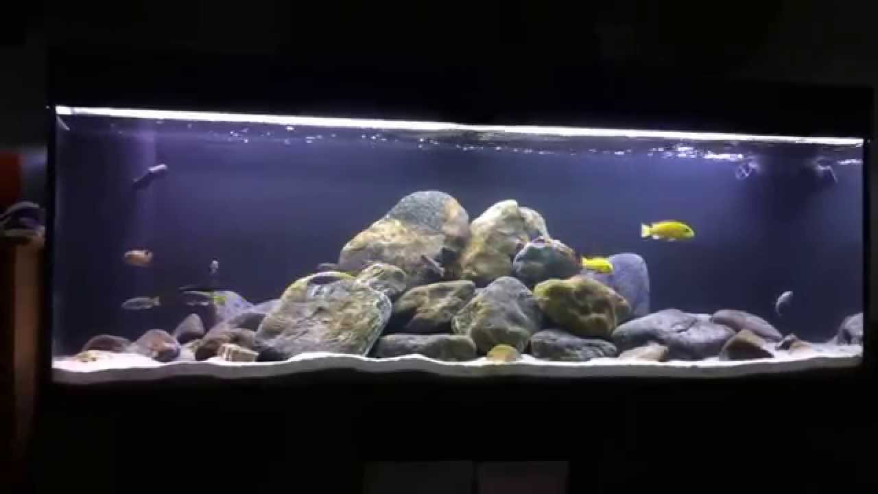 Acquario malawi mbuna work in progress 04 2014 youtube for Filtro acquario fai da te