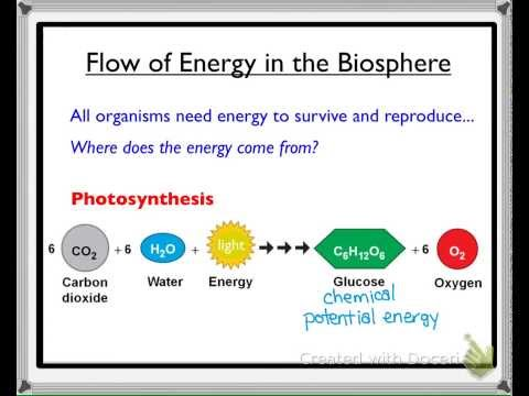 Biology 20: Flow of Energy in the Biosphere