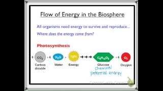 Biology 20: Flow of Energy in the Biosphere