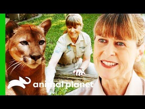 Terri Irwin's Best Moments From Season 2! | Crikey! It's The Irwins