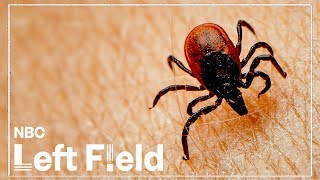 Science Can't Agree if Chronic Lyme Disease is Real | NBC Left Field