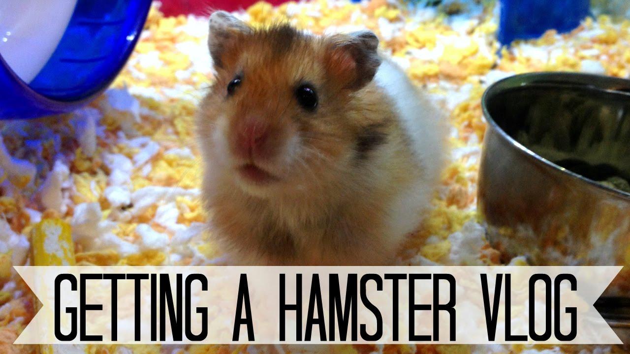 Hamster.Com Video