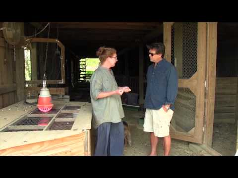 Raising Sheep and Chickens with Solarized Electric Fencing #153