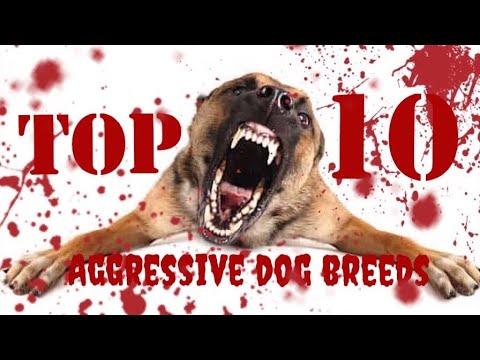 ❌ Don't Watch ❌ Top 10 Most Aggressive Dog Breeds In the World