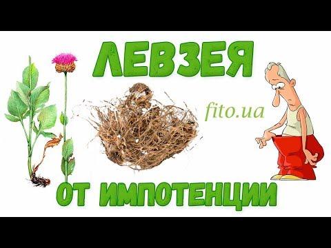 Маралий корень - Левзея сафлоровидная: инструкция, применение, приготовление