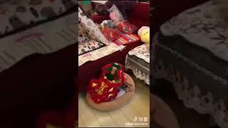 狗狗小舞狮装超可爱 small lion dance dress for pet so cute, happy chinese new year 2019