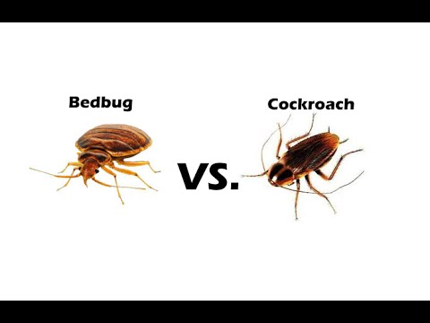 how to know how bad a roach infestation is
