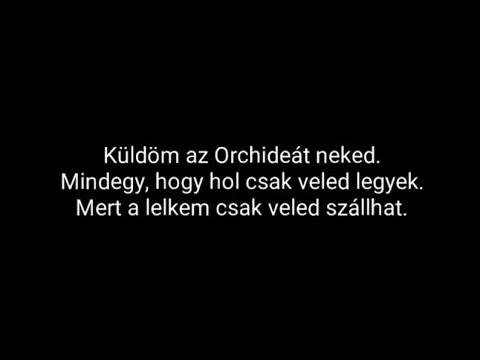 Download Horváth Tamás - Orchidea |Dalszöveg|