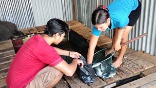 🔴Kehidupan Suku Dayak Pedalaman Kalimantan Barat   Ambil Ikan Di Rumah Terapung