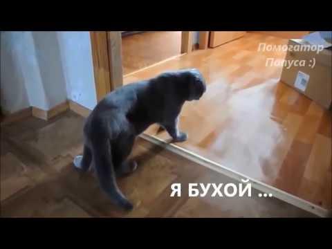 Говорящие коты. Лучшая подборка №13