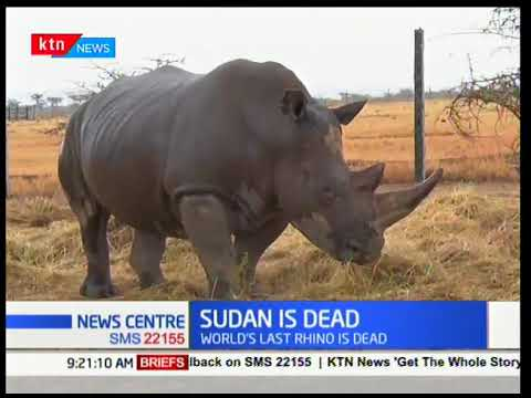 """SUDAN"" the world last male white rhino is dead"