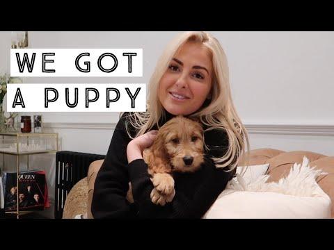 WEEKLY VLOG | WE GOT A PUPPY