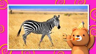 Африканские животные для детей🌴🐘Викторина - Развивающие мультики для детей