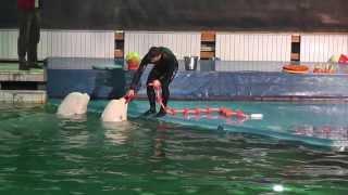 Дельфинарий Санкт-Петербург(декабрь 2013., 2013-12-28T19:46:40.000Z)