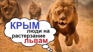 Крым, людей отдали на растерзание львам