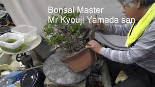Bonsai fertilizer we use always oil cake and we introduce how to make it.