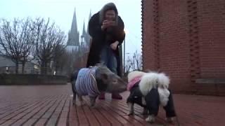 Кёльн! Аргентинская свинка Пиги и Украинский сторожевой пёс Валера!