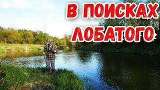 Рыбалка на ЛЕСНОЙ реке Рыбалка на ГОЛАВЛЯ в Подмосковье Ловля спиннингом весной на малой реке