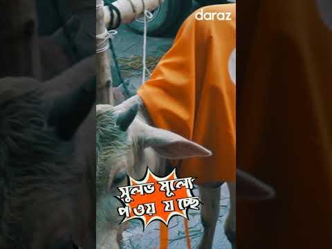 Qurban Eid Online Gorur Hat on Daraz Bangladesh   Daraz Bangladesh Eid Big Sale #Shorts
