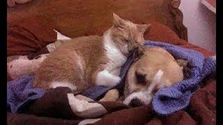 「ボクがついてるよ」花火の音に怯えていた犬。心配した猫が駆け寄り… ...